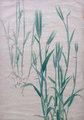 丸井金猊 植物圖展レポート