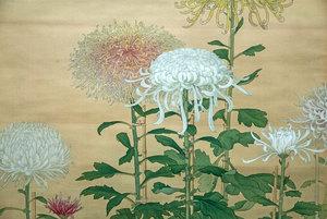 菊 - Chrysanthemum Morifolium