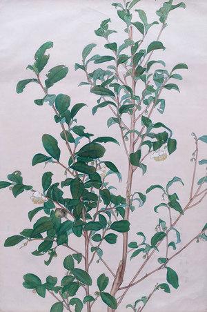 丸井金猊『茶椿』