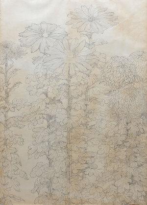 『菊』下絵 1979年