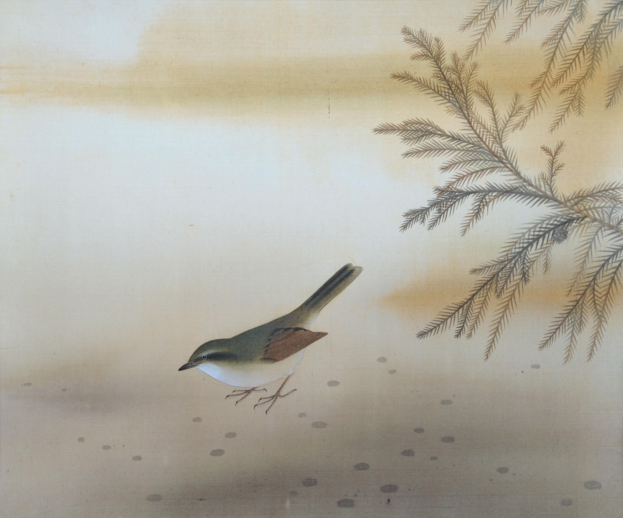 鶯圖 - Bush Warbler