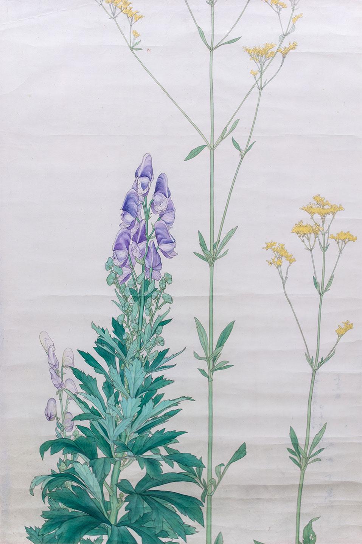 鳥兜+女郎花* - Monkshood and Patrinia scabiosifolia