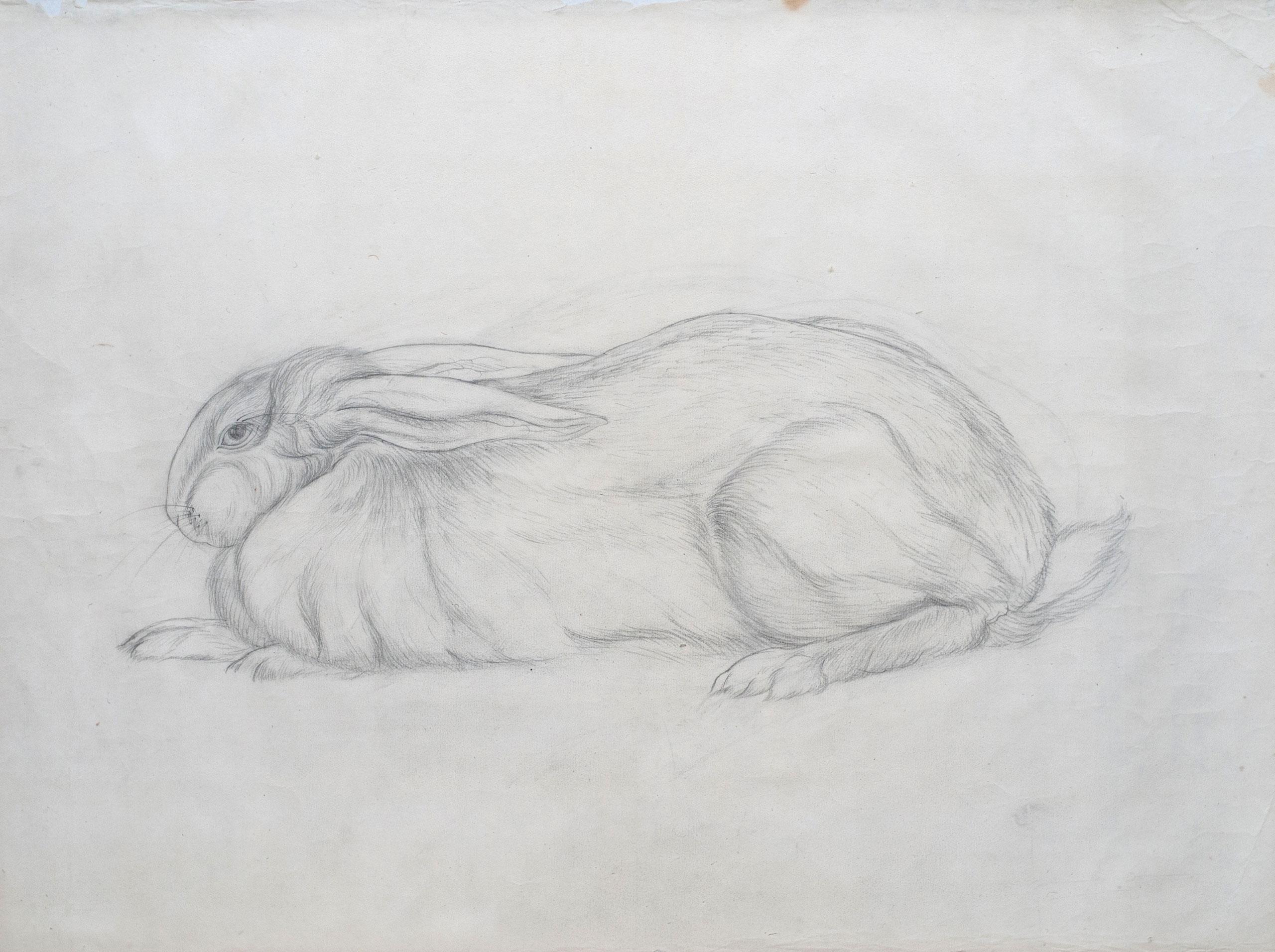 兎* - Rabbit