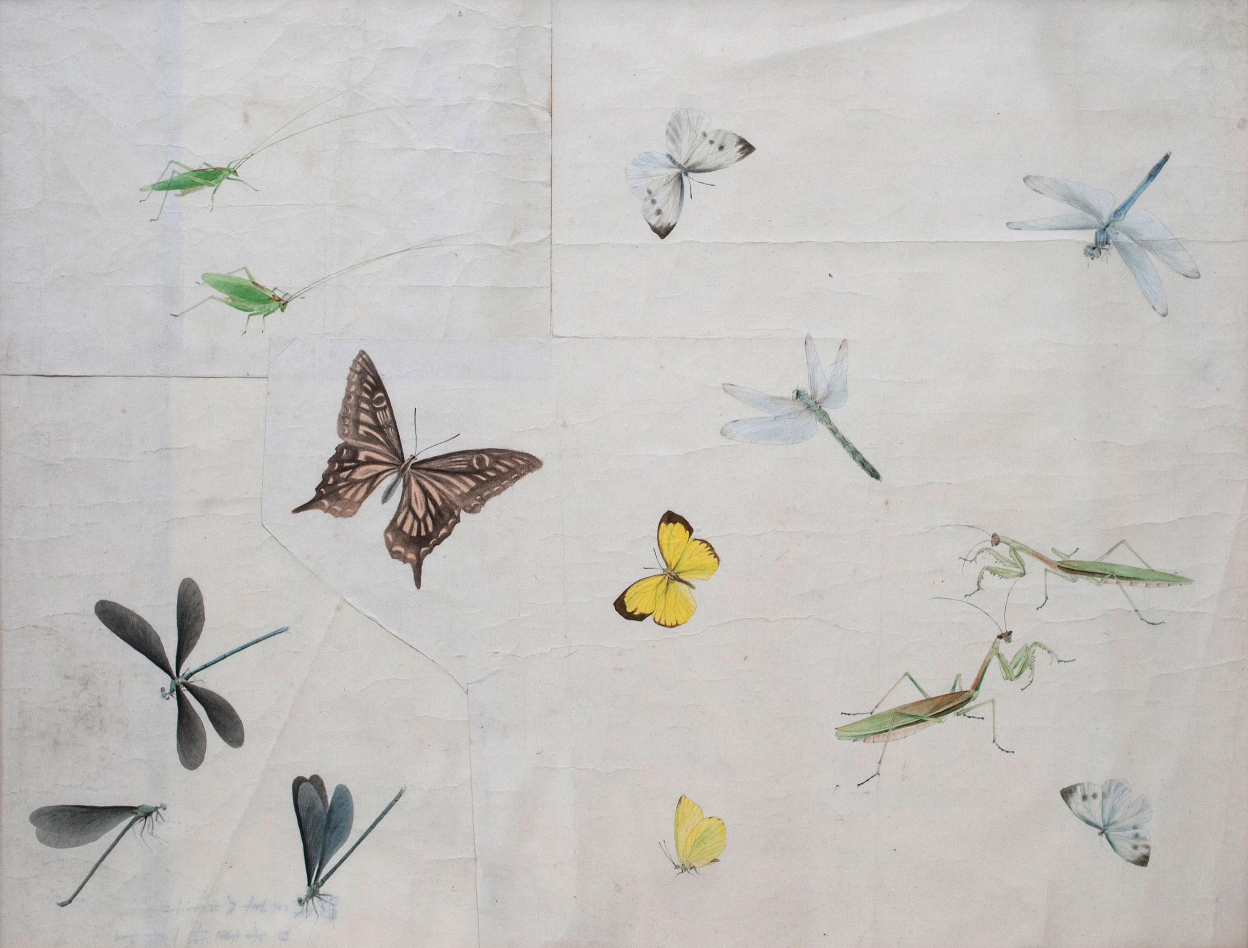 蟲圖* - Insects
