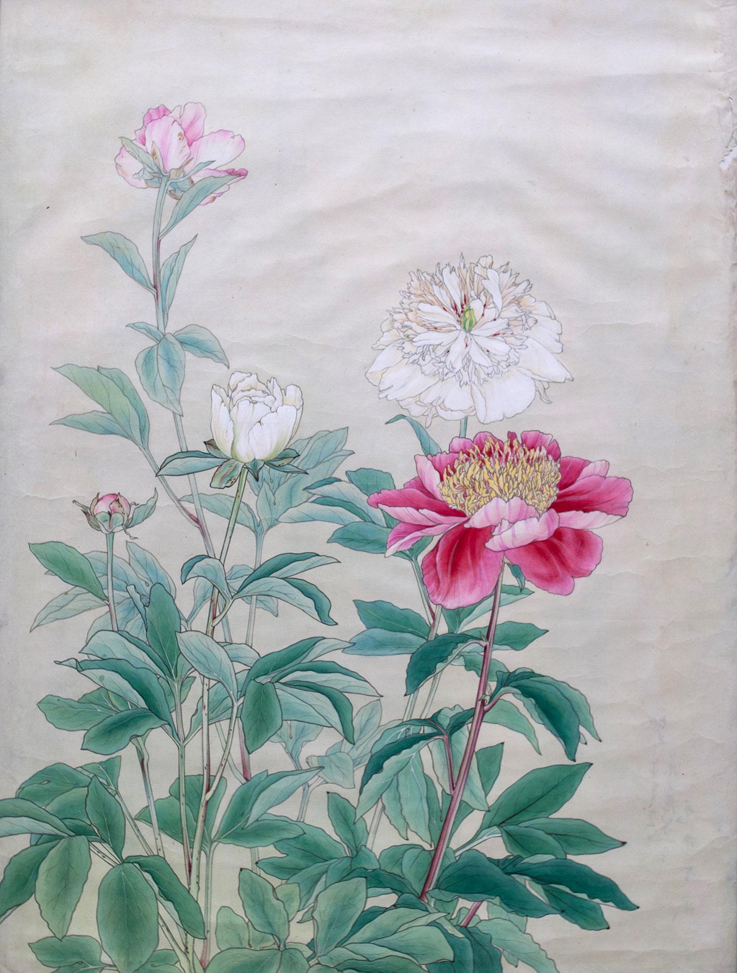 芍薬* - Paeonia Lactiflora
